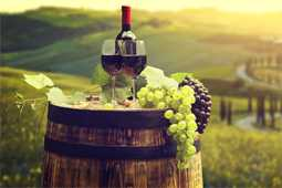 Wine Tourism Development Executive